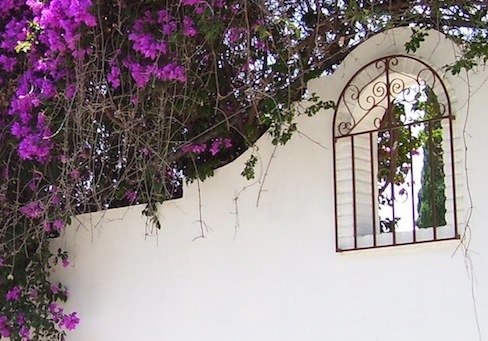 white wall with window and bougainvillea
