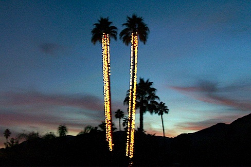 two tall palm streets strung with white lights