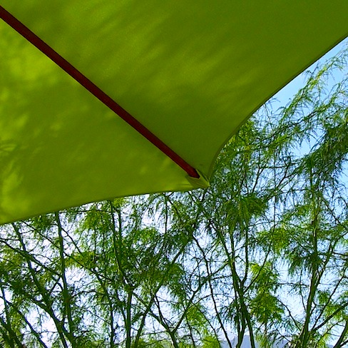 picture of palo verde with green umbrella