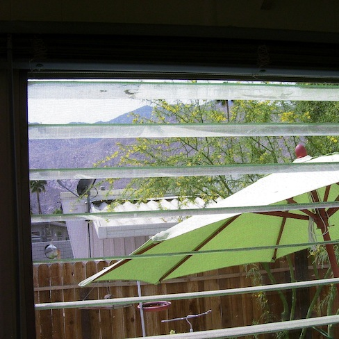 view from the kitchen window (palo verde, mountains, lime green umbrella)