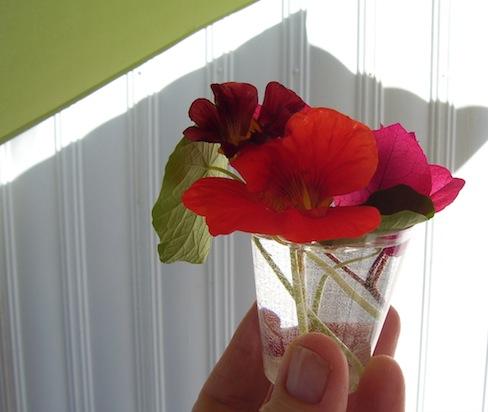 nasturtiums, bougainvillea