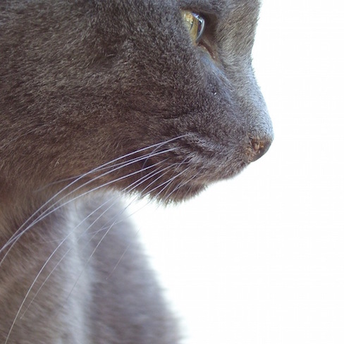 close-up, cropped image of my cat