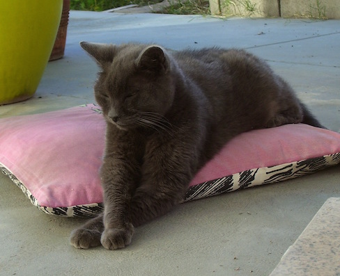 Sofia on a pillow on the patio with her arms crossed