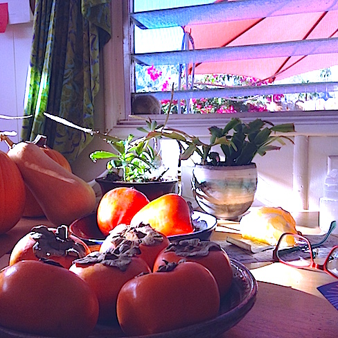 Persimmons, cactus, glasses on the messy kitchen table